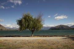 Slumpmässigt träd Arkivfoto