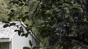 Slushy Schnee, der auf Madronabaum und -halle fällt stock video