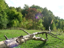 Slusken på den gröna gräsmattan Arkivbild