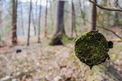 Slut av vintern i skog arkivbild
