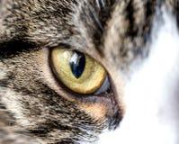 Slut för öga för katt` s upp royaltyfri foto