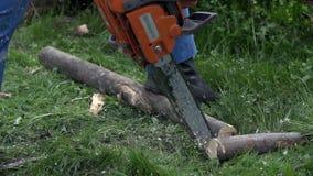 Slut för Chainsawing litet inloggningsultrarapid upp
