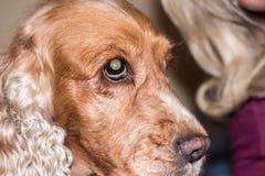 Slut för detalj för makro för hundnäsa upp Fotografering för Bildbyråer