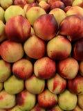 Slut för främre sikt upp nya saftiga organiska gula nektariner Royaltyfri Fotografi