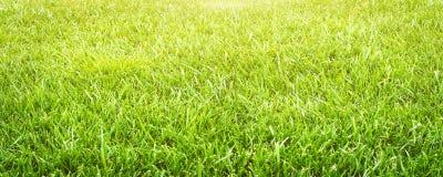 Slut för gräsfält upp grön textur för gräs Abstrakt sommarpanorama Royaltyfria Bilder