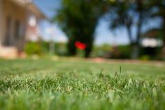 Slut för grönt gräs upp Royaltyfri Fotografi