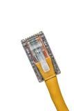 Slut för LAN-kabel upp royaltyfri foto