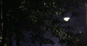 Slut för nattgataljus upp lager videofilmer
