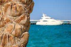 Slut för palmträdstam upp på stranden med den stora vita dyra yachten arkivbilder