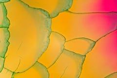 Slut för snitt för kristall för Fluoritedrakeåder upp Royaltyfri Foto