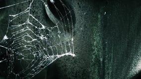 Slut för spindelrengöringsduk upp makro framme av den lantliga metallplattan Ljus kamerarörelse Spöklik eller borttappad ställebe arkivfilmer