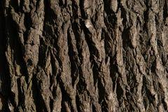Slut för textur för ekskäll upp den konstnärliga detaljerade eiffel ramen france horisontalmetalliska paris mönsan skjutit visa s royaltyfria bilder