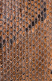 Slut för textur för yttersida för ormhud upp för bakgrund Arkivbild