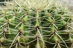 Slut som textureras upp av kaktusväxten Royaltyfri Fotografi