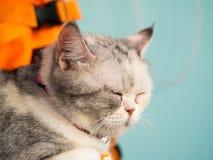 Slut upp att sova för katt och suddighetsbakgrund Arkivbilder