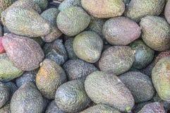 Slut upp av avokadon arkivfoton