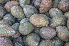 Slut upp av avokadon royaltyfri bild