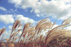 Slut upp av blommagräs Fotografering för Bildbyråer