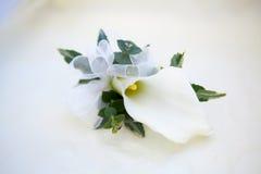 Slut upp av blomman för callalilja Royaltyfri Fotografi