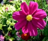 Slut upp av blommor i blom Arkivfoto