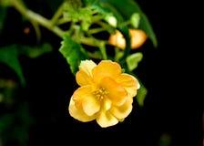 Slut upp av blommor i blom Royaltyfria Foton
