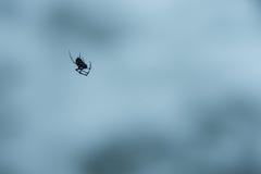 Slut upp av den farliga seende svarta spindeln Royaltyfri Fotografi