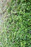Slut upp av den gröna lilla växten Arkivfoto
