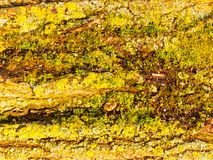 Slut upp av den gröna naturen för modell för textur för mossaskällyttersida Royaltyfria Bilder