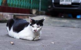 Slut upp av den hemlösa katten som är lekmanna- framme av gammal byggnad i Thailand Den ensamma katten lägger på sida går ner arkivbild