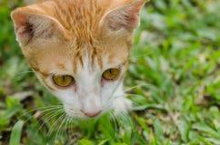 Slut upp av den orange katten Arkivfoto