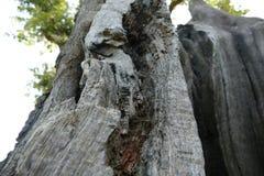 Slut upp av det ihåliga trädet Arkivbilder