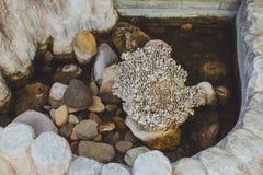 Slut upp av det kor- havet (korall) Royaltyfria Bilder