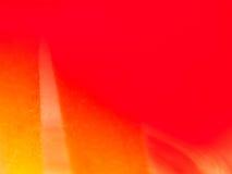Slut upp av det röda roskronbladet Royaltyfri Fotografi