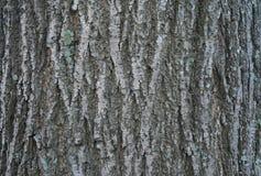 Slut upp av detaljer för trädskäll - bakgrund eller textur Arkivfoton