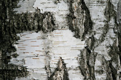 Slut upp av detaljer för trädskäll - bakgrund eller textur Royaltyfria Foton