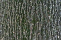 Slut upp av detaljer för trädskäll - bakgrund eller textur Arkivbilder