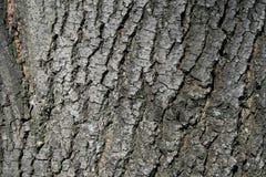 Slut upp av detaljer för trädskäll - bakgrund eller textur Fotografering för Bildbyråer