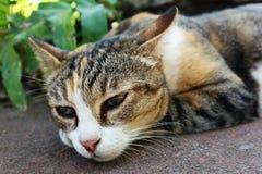 Slut upp av en Cat Relaxing On The Ground fotografering för bildbyråer