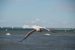 Slut upp av en fiskmås i flykten på stranden för baltiskt hav med blå himmel Royaltyfria Foton