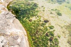 Slut upp av en flodkust med grön mossa och alger Royaltyfria Foton