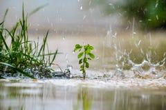 Slut upp av en grön växt Fotografering för Bildbyråer