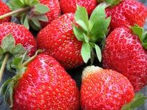 Grupp av jordgubbar Arkivbild