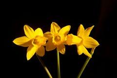 Slut upp av en härlig blomma arkivbild
