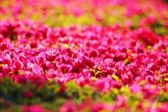 Slut upp av en härlig blomma royaltyfri bild