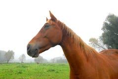 Slut upp av en häst arkivbild