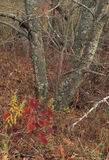 Slut upp av en hög av gula sidor, höstlandskap Arkivfoto