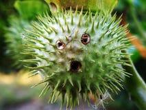 Slut upp av en kaktus arkivfoton