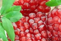 Slut upp av en organisk granatäpplefrukt Royaltyfri Fotografi