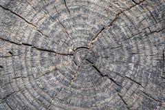 Slut upp av en trädsnittstemp Royaltyfri Bild