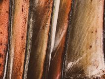Slut upp av en tropisk palmträd Abstrakt begrepp gömma i handflatan textur för naturbakgrund Royaltyfri Fotografi